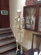 The Museum's resident skeleton.