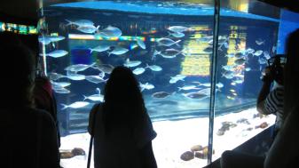 Admiring fish at the Aquarium of Barcelona.